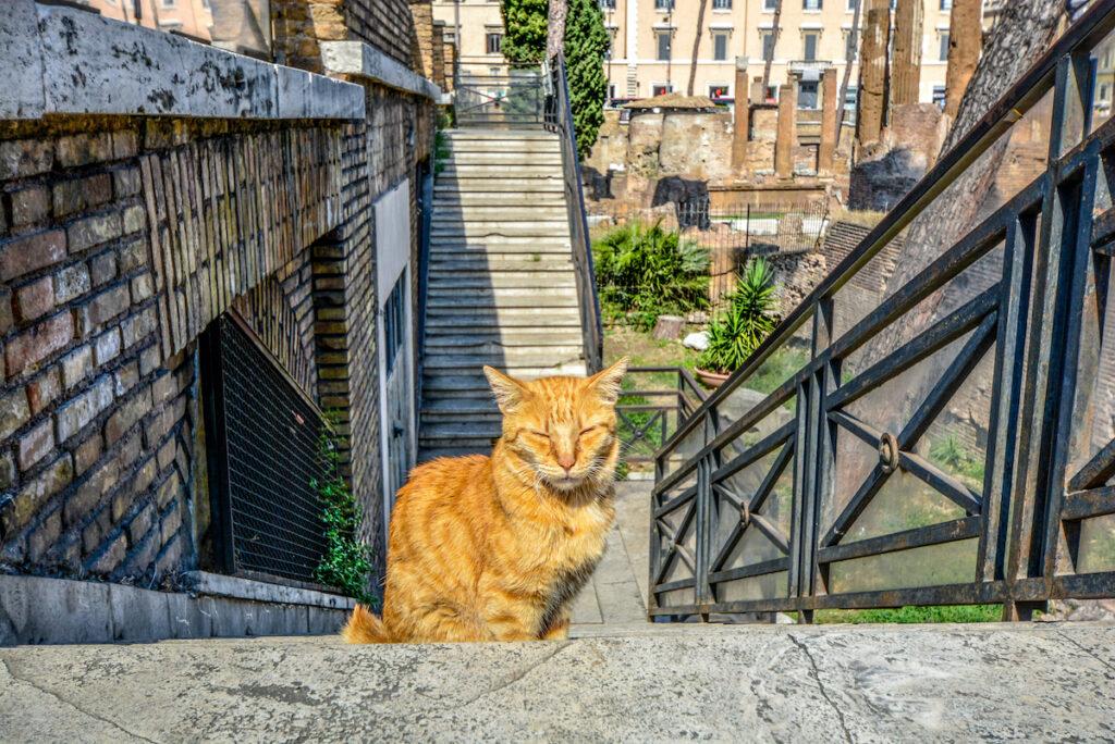 A cat in Gatti di Roma Sanctuary.