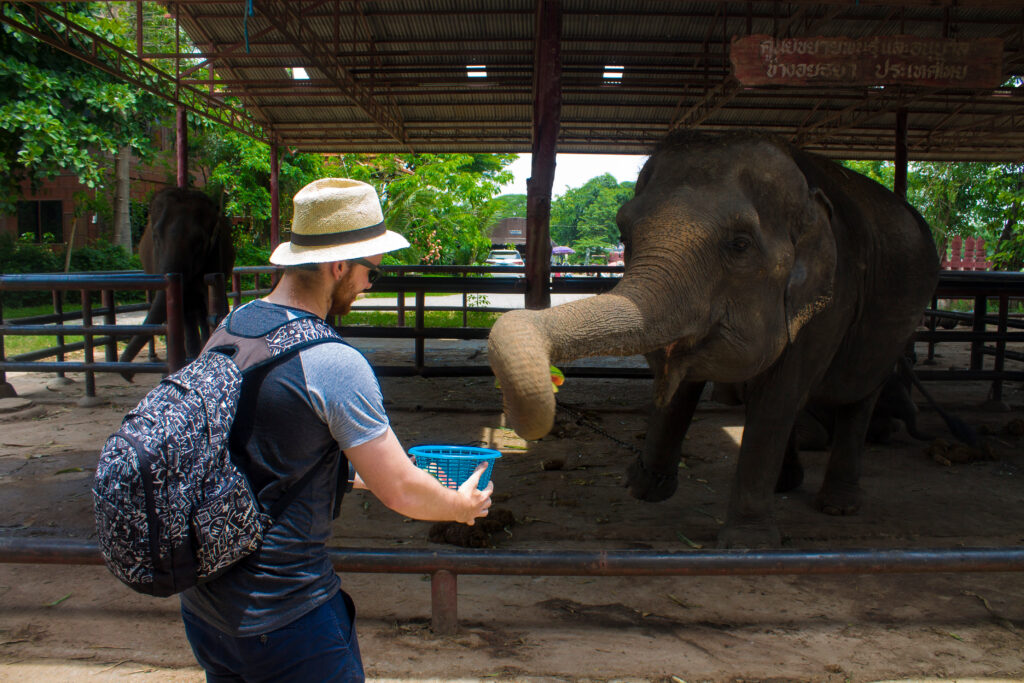 Elephant organization Elephantstay.