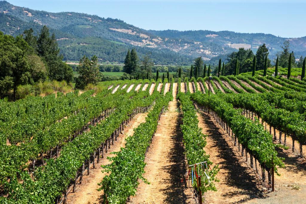 The Castello di Amorosa vineyard in Napa Valley.