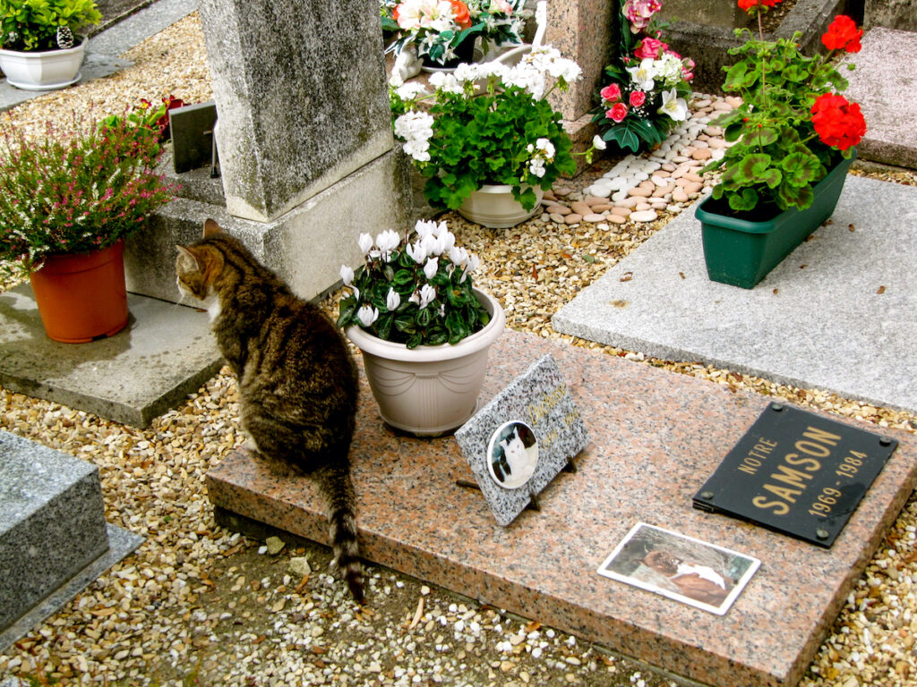 Cat on a grave in Dog Cemetery.