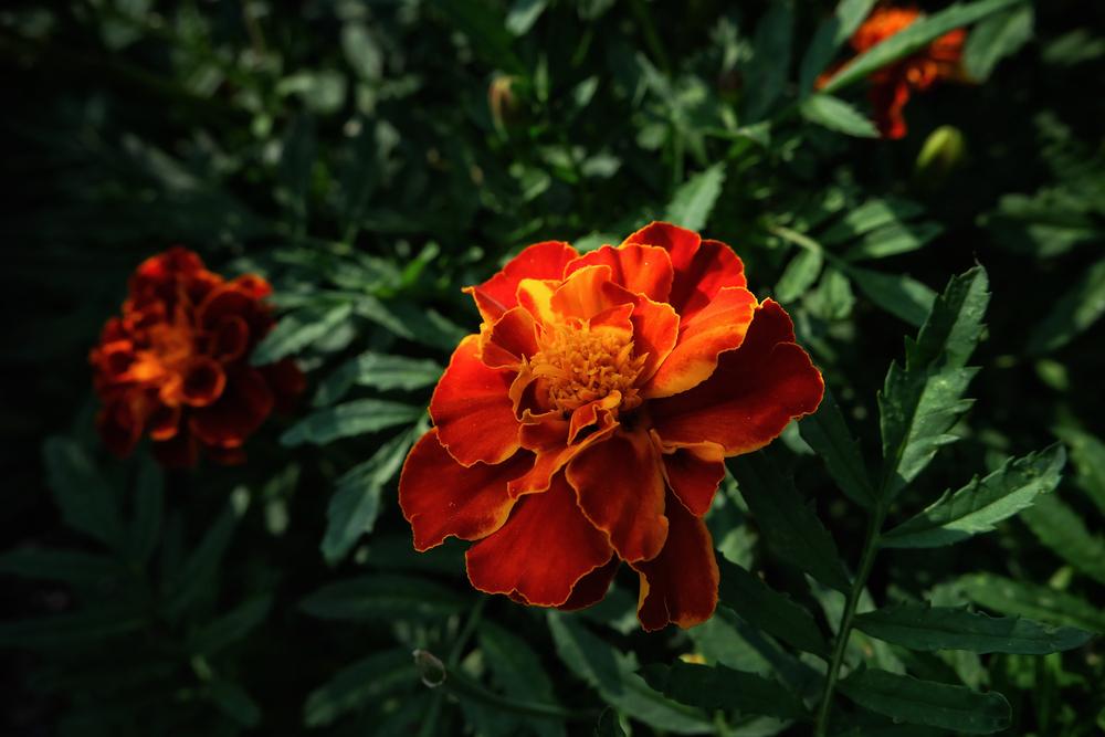 The flowers at Coastal Maine Botanical Gardens