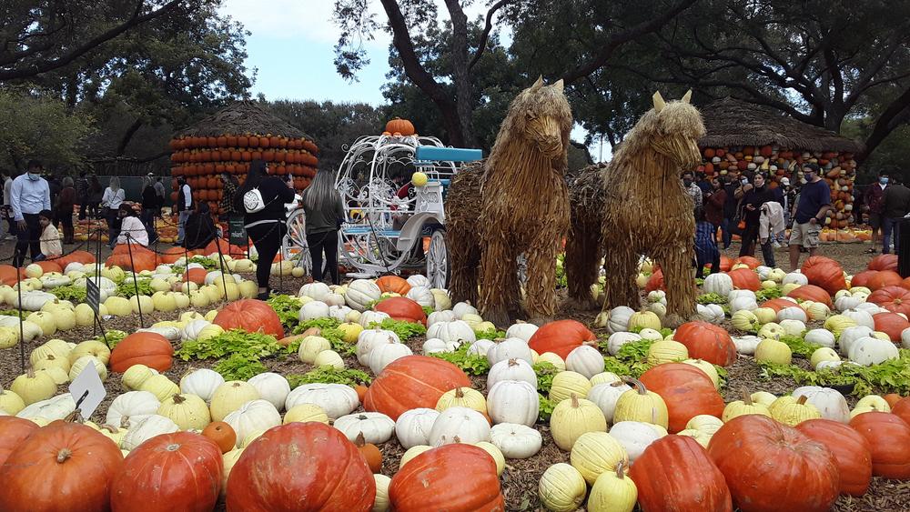 Pumpkin Village at Dallas Arboretum