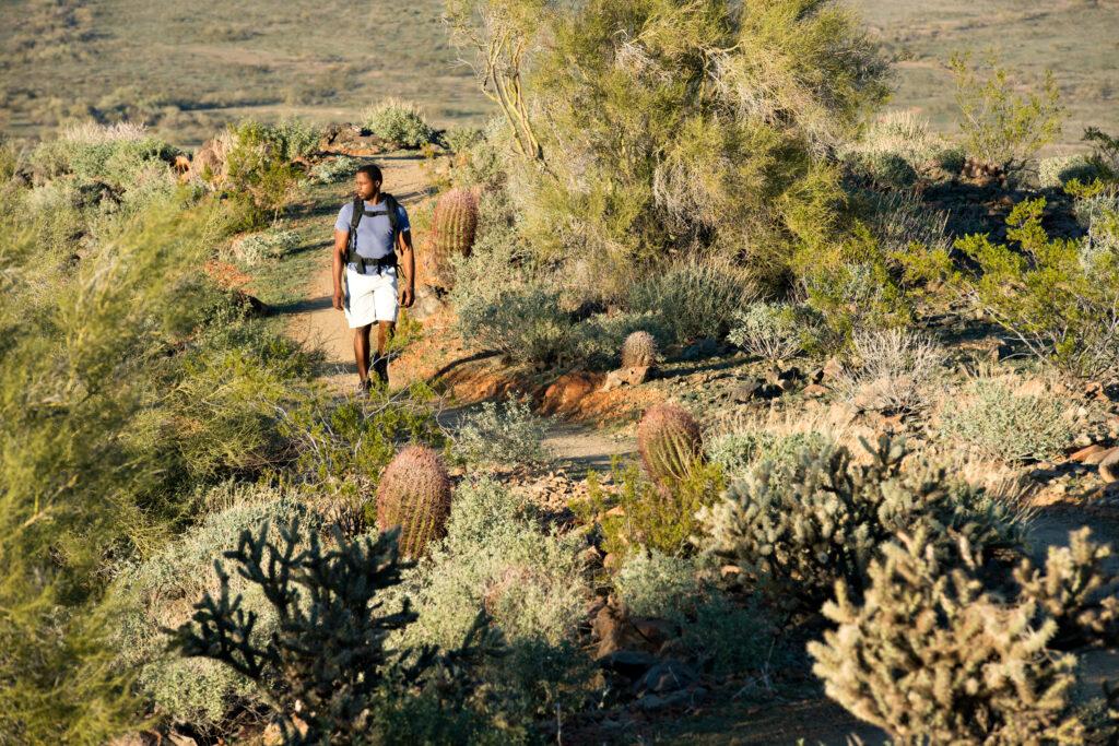 The Sonoran Desert Preserve.