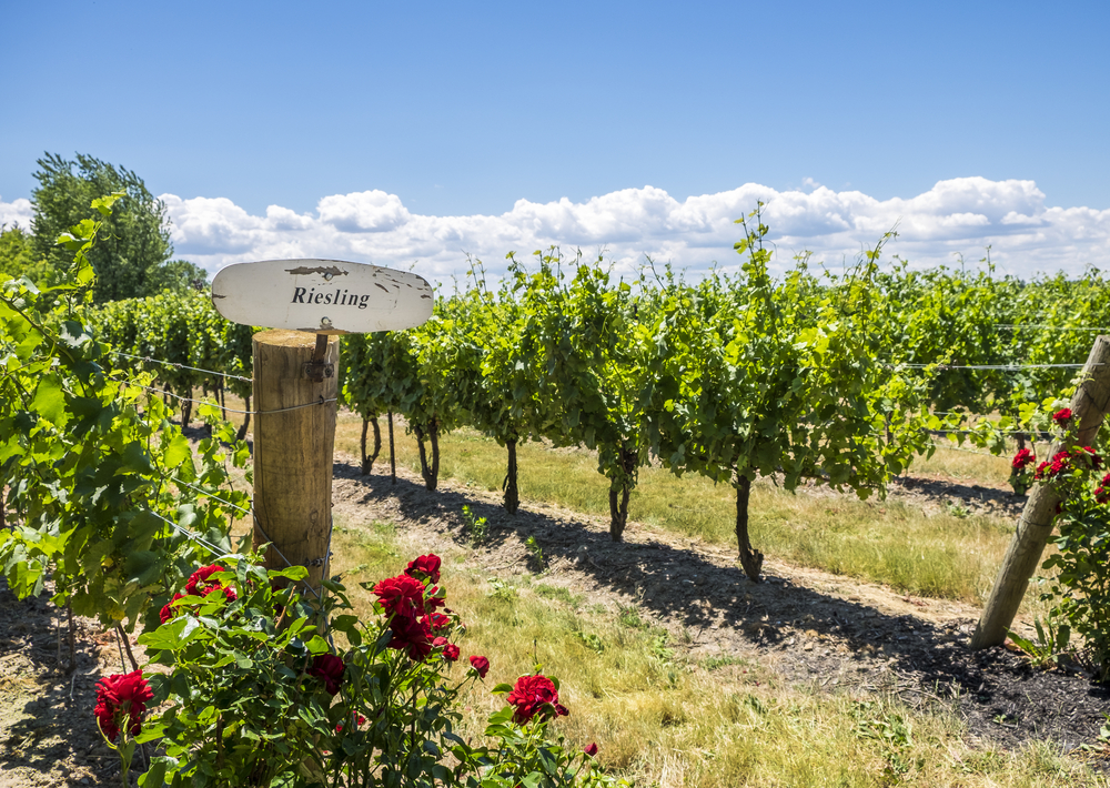 A Riesling sign with red roses below at the entrance to a vineyard in Best International Small Town Winner: Niagara on the Lake, Canada.