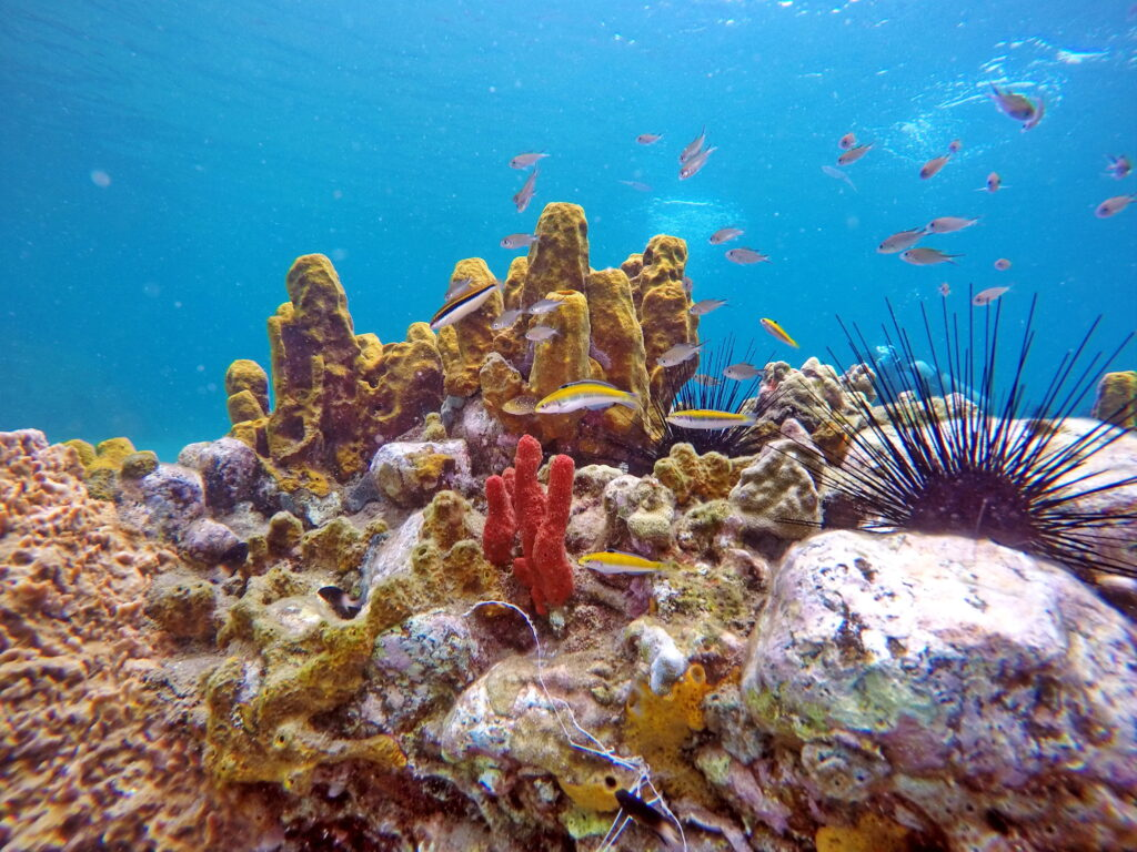 Small fish and coral off the coast of Saint Lucia.