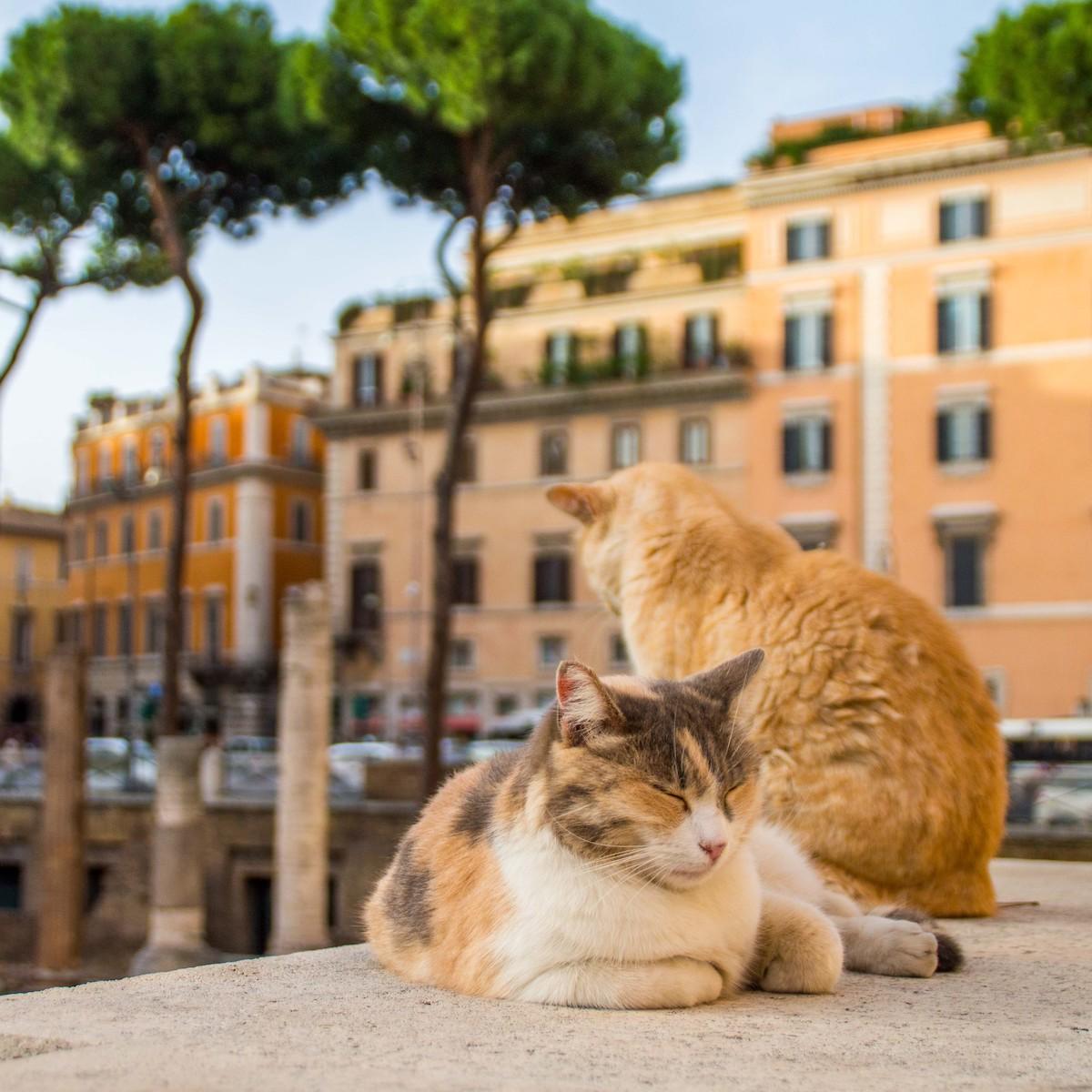 Stray cat in Rome, Italy.
