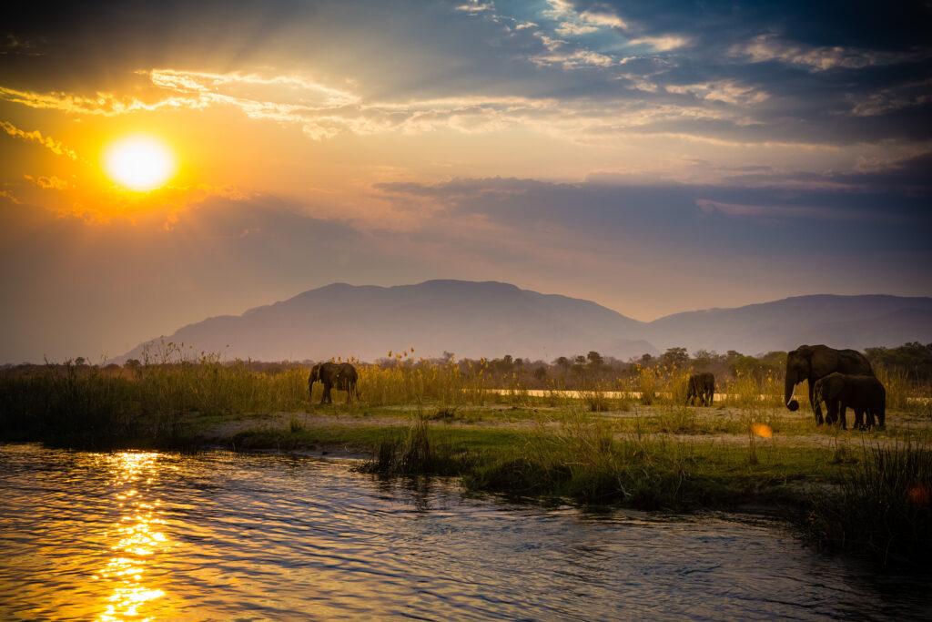 Elephants in Lower Zambezi National Park - Zambia.