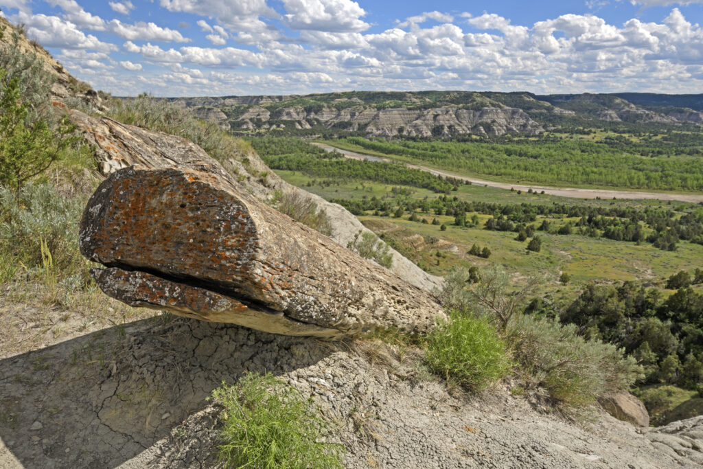 Petrified Wood in Theodore Roosevelt National Park.