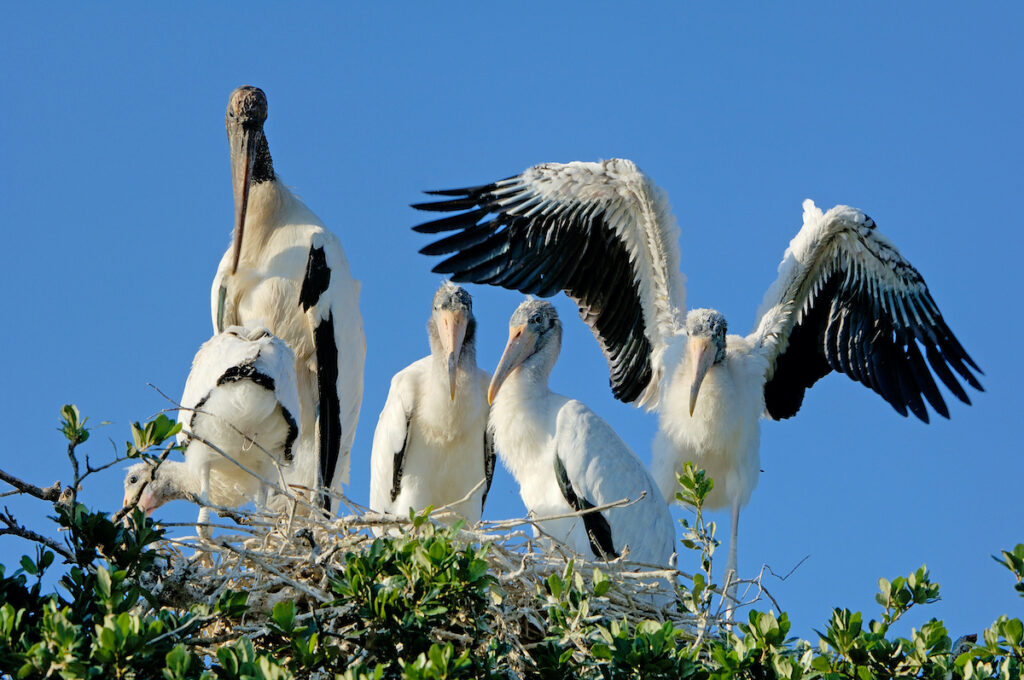 Storks at the sanctuary.