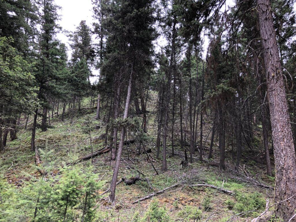Rugged wilderness in Blackfoot River.