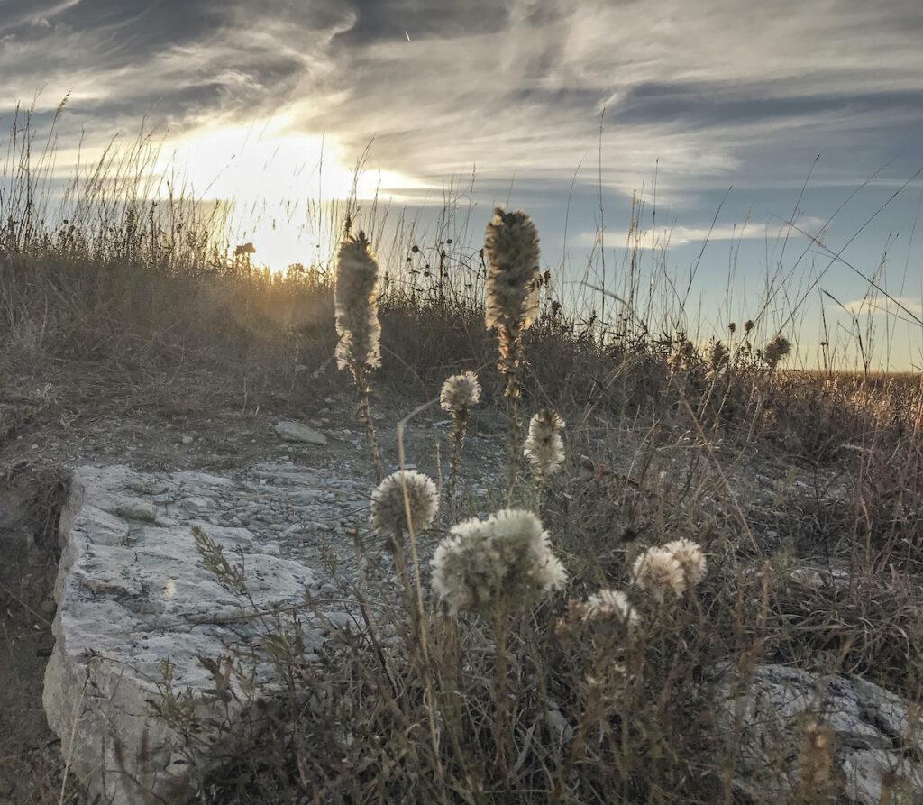 Konza Prairie.