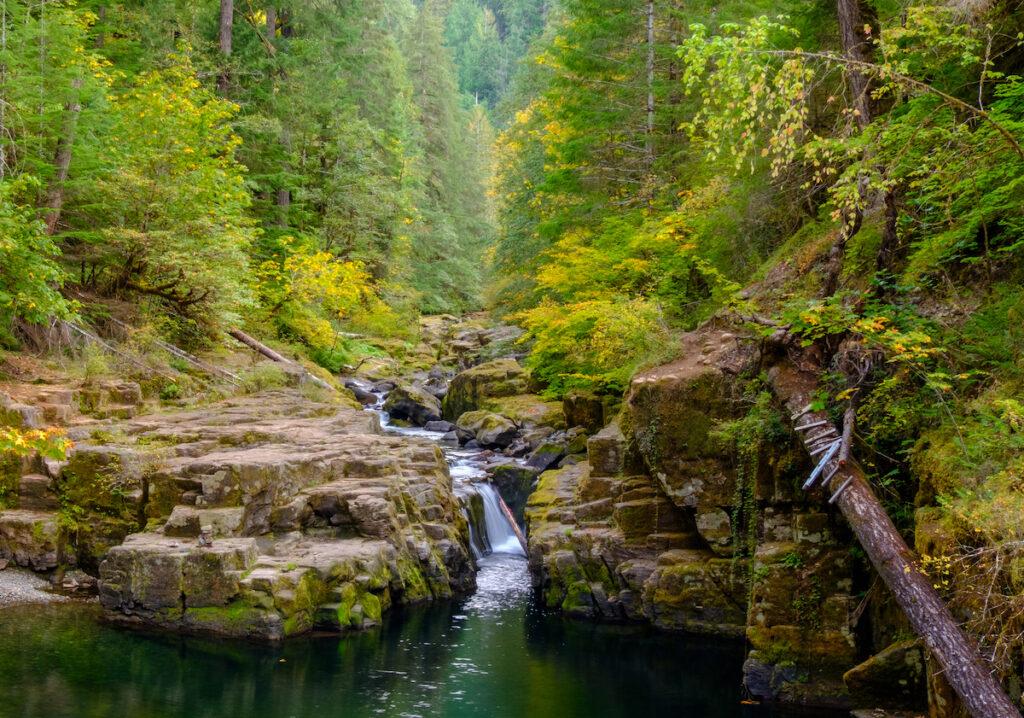 Brice Creek in Oregon.