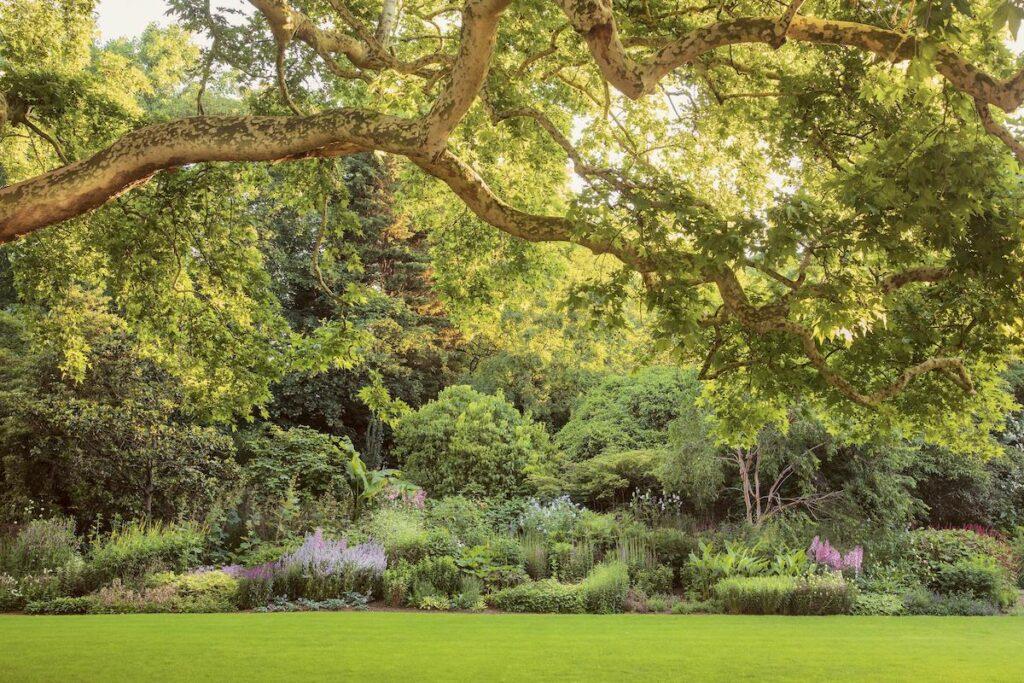 Buckingham Palace gardens.
