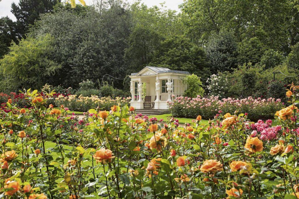 Roses at Buckingham Palace.