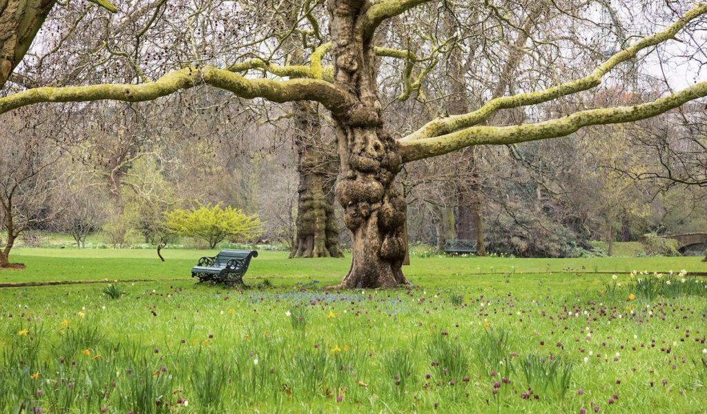 Buckingham Palace grounds.