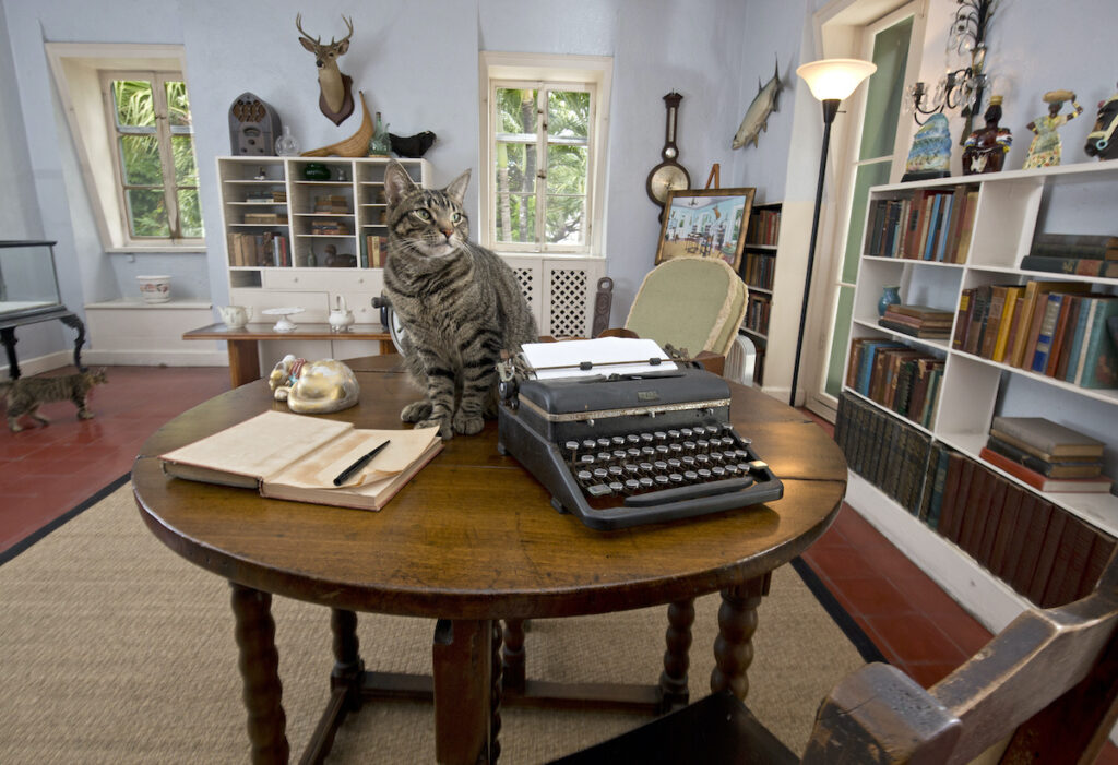 The Hemingway Cat paired with typewriter and notebook, for the Hemingway Days Party in Key West.