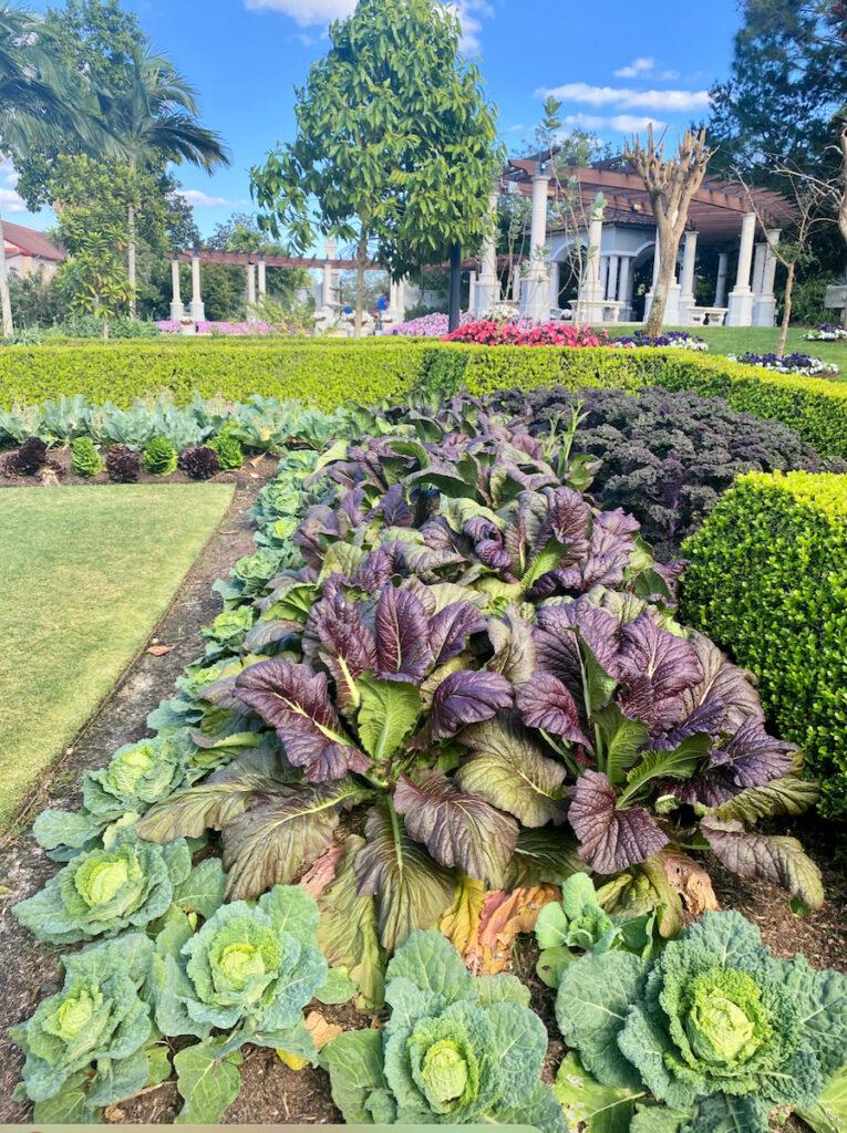 Hollis Garden.