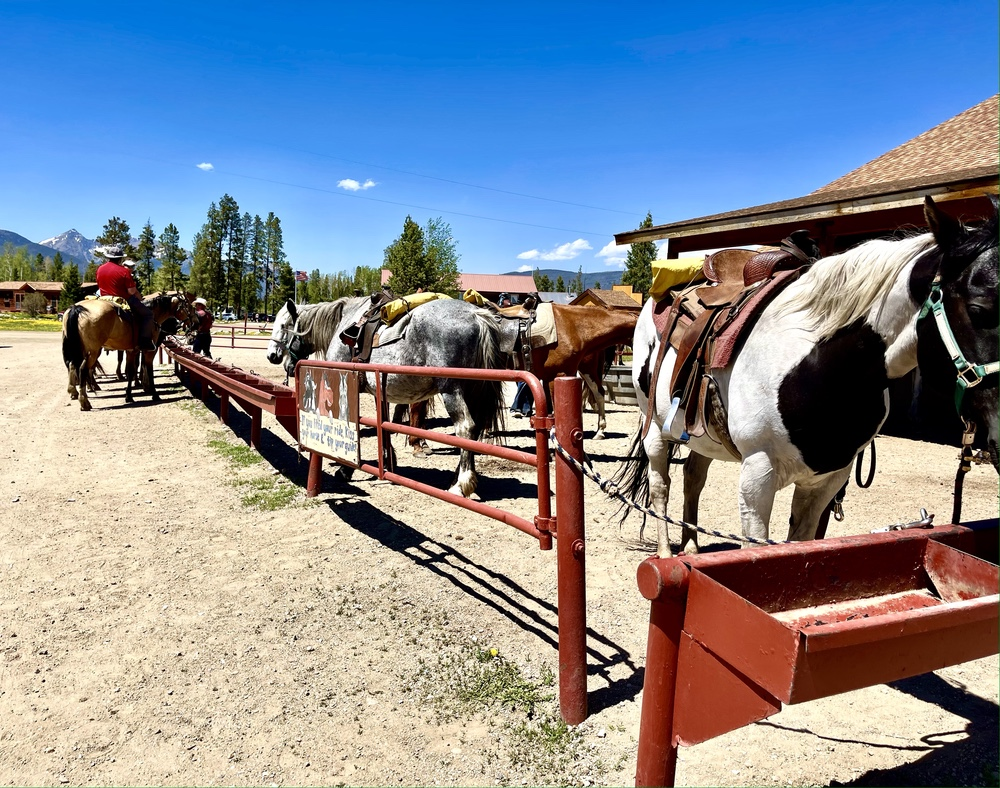 Horses and Stable At Winding River Resort
