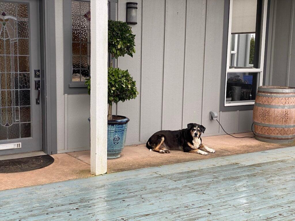 Wine dog at Keeler Estate Vineyards.