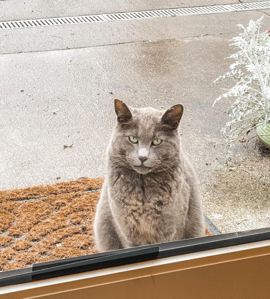 Friendly cat at Left Coast Estate.