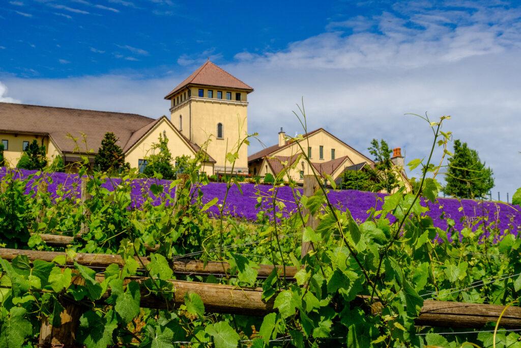 King Estate Winery near Eugene, Oregon.