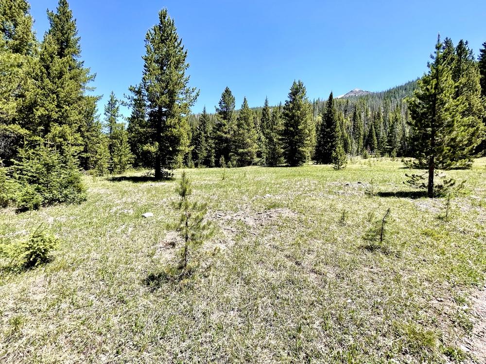 Meadow Where Lulu City Once Stood