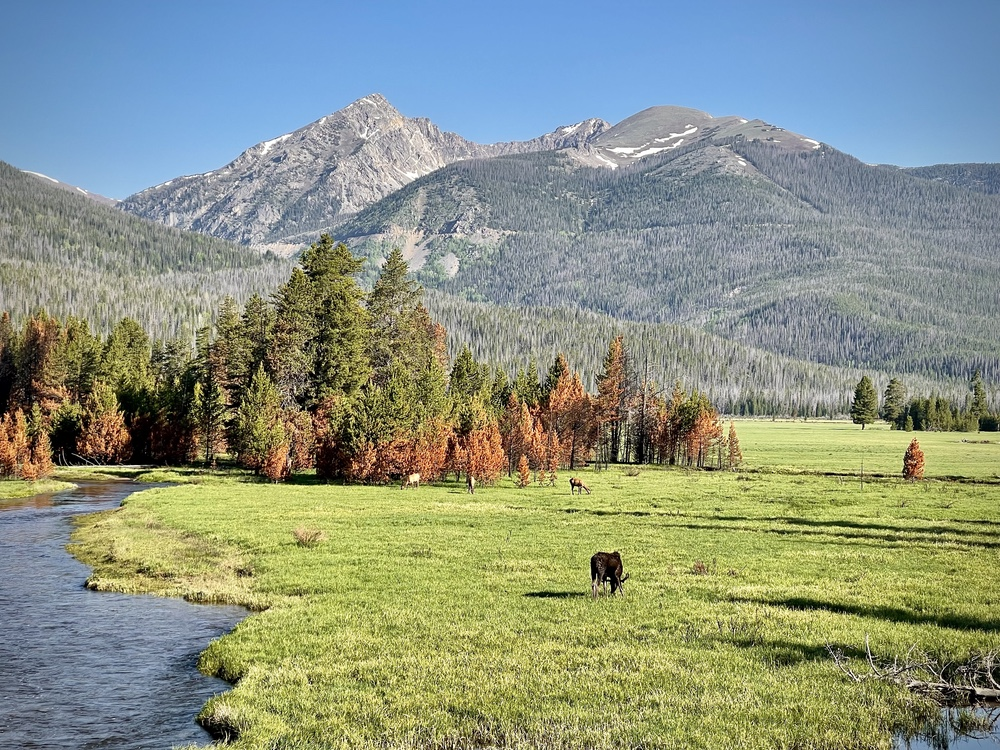 Moose and Elk Grazing In Rocky Mountain National Park