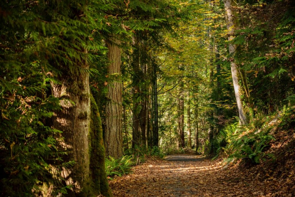 forest that surrounds The Lodge at St. Edward State Park