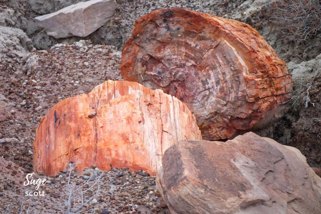 Petrified wood in Arizona.