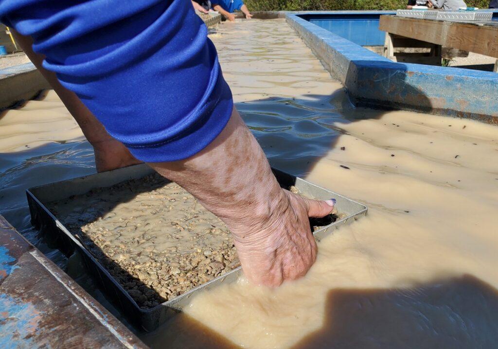 Washing gravel during sapphire mining.