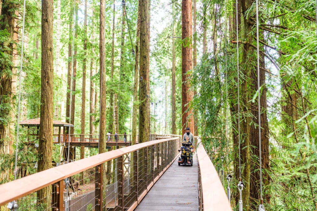 Redwood Sky Walk is a safe, ADA-accessible activity.
