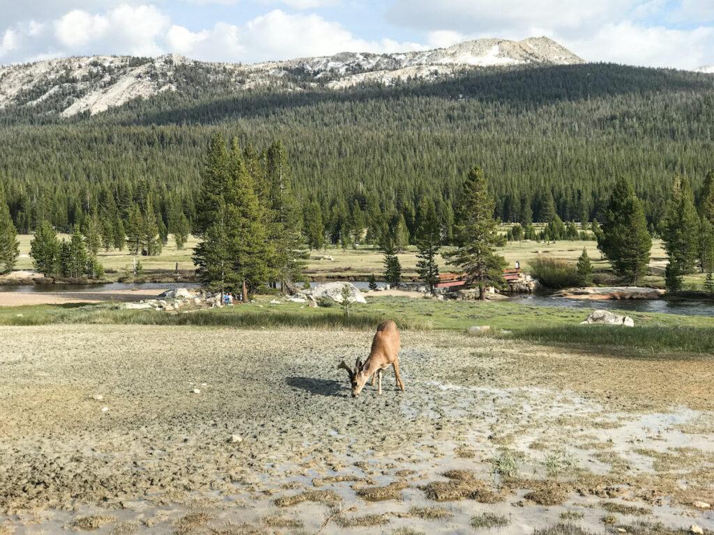 Toulumne Meadow at Yosemite National Park.