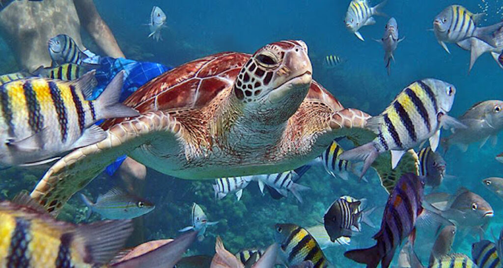 Colorful underwater marine life in Belize.