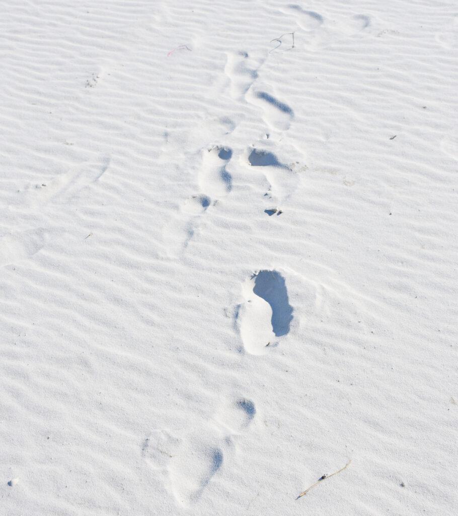 Footprints in Florida sand