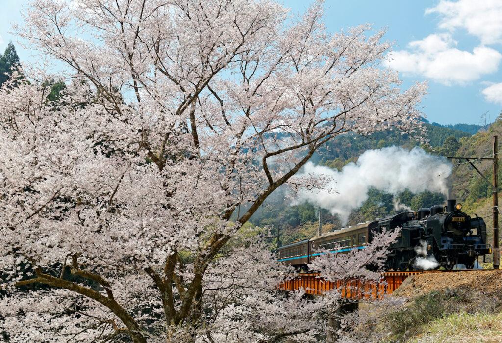 Oigawa Railway in Japan.