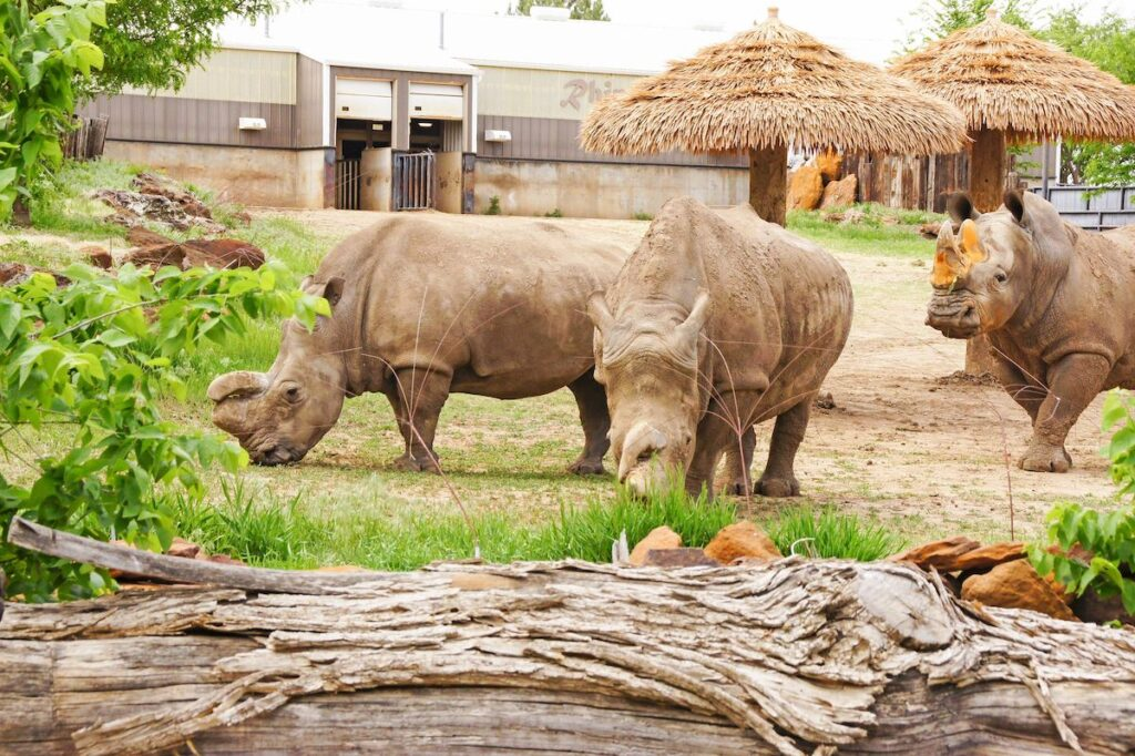 Rhinos at Rolling Hills Wildlife Adventure.