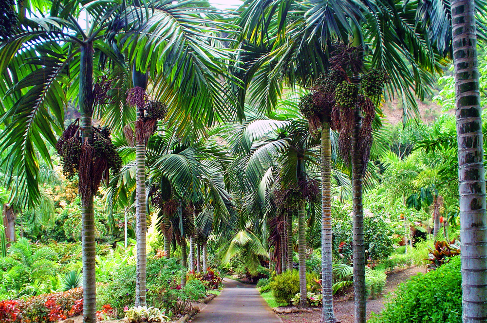 Maui Nui Botanical Gardens, Hawaii