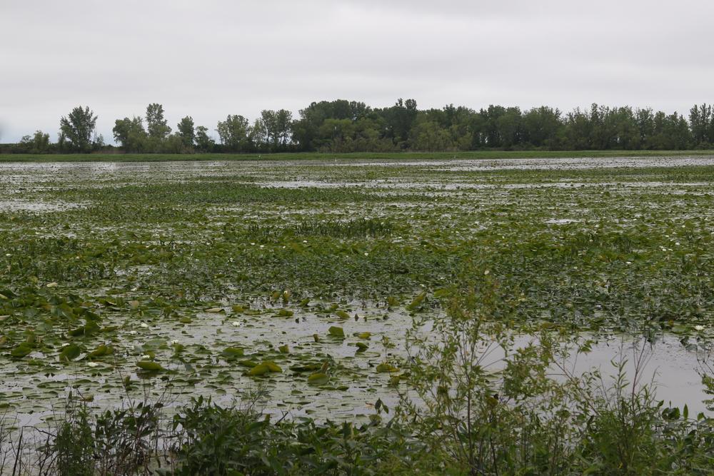 Wetland at Metzger Marsh Wildlife Area, Ohio.
