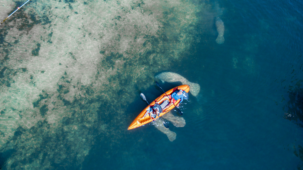 overhead view kayaking in Florida with manatees