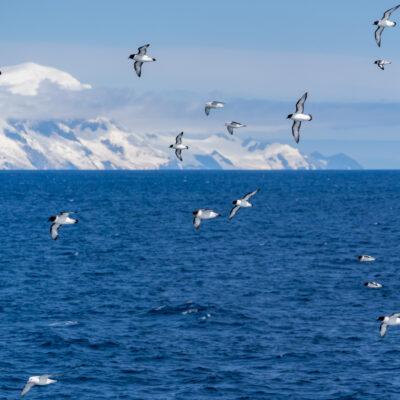 The Southern Ocean near Antarctica.