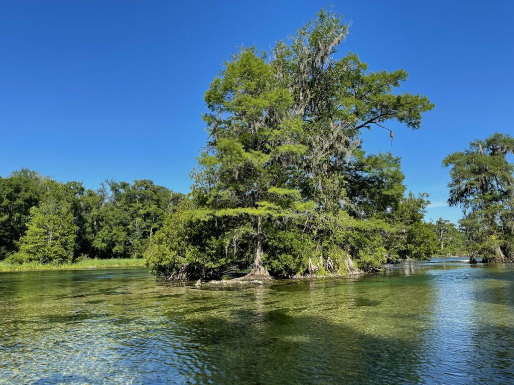 View on Wakulla River at Wakulla Springs State Park, Florida.