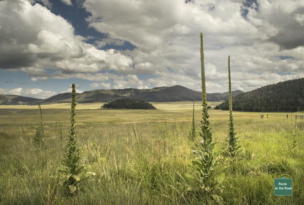 Cerro La Jara between wildflower spikes in Valles Caldera National Preserve.