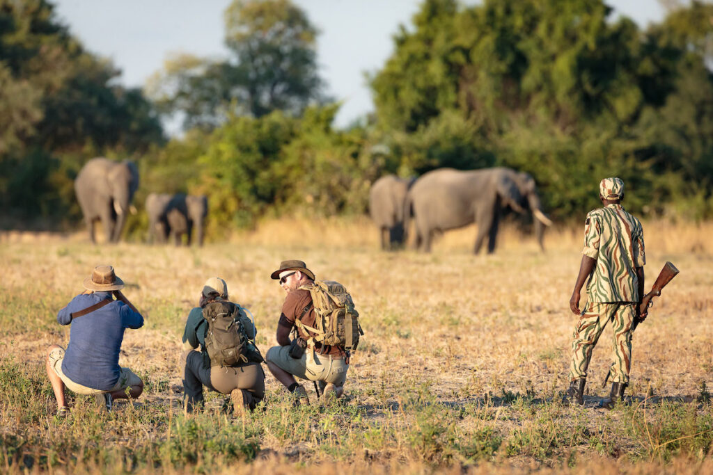 Seeing elephants during a private safari