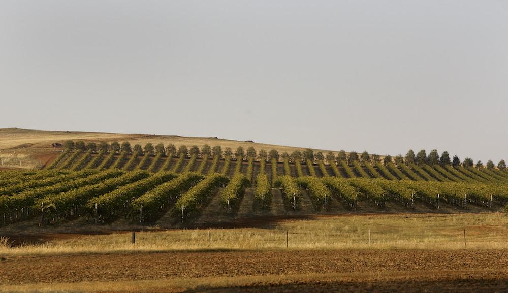 Winery in Heathcote