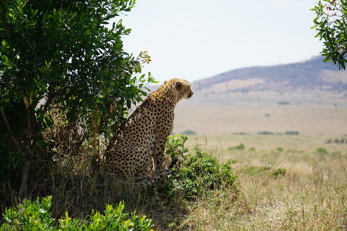 16 Things To Know Before Your First Visit To Kenya