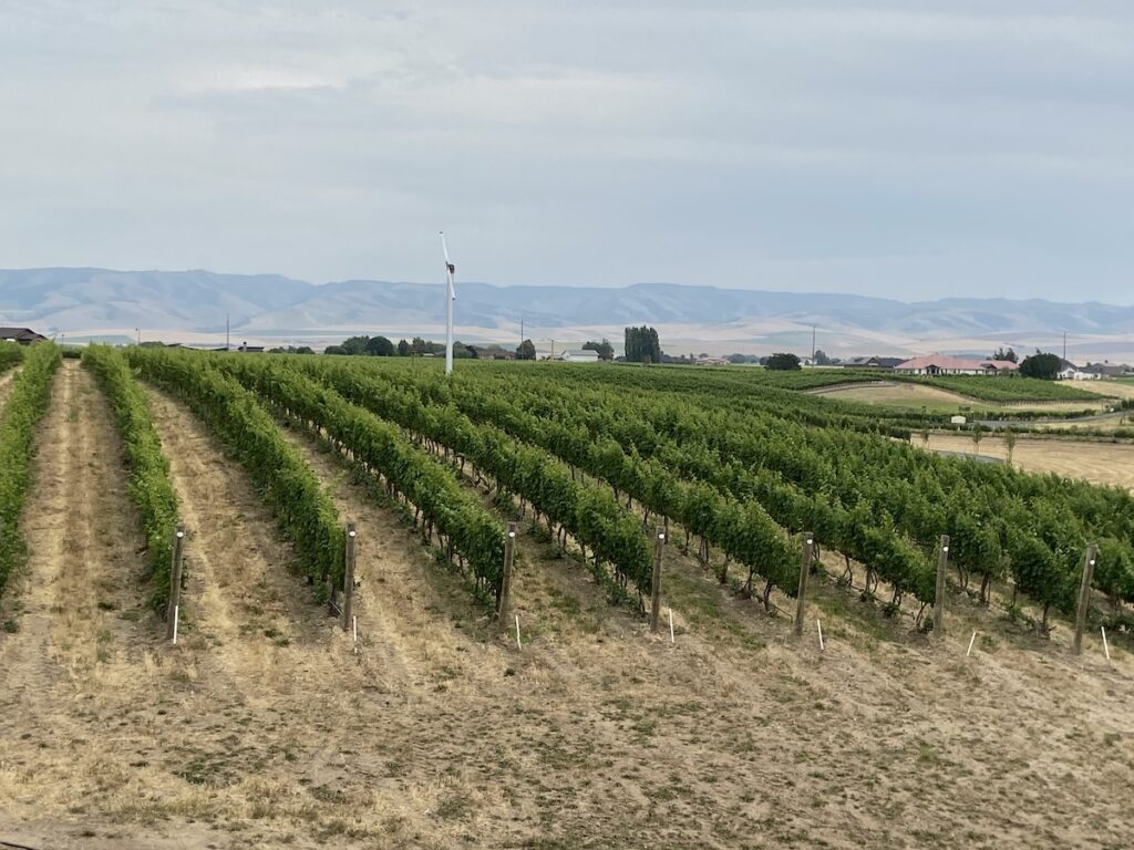 Vineyards at Pepper Bridge Winery.