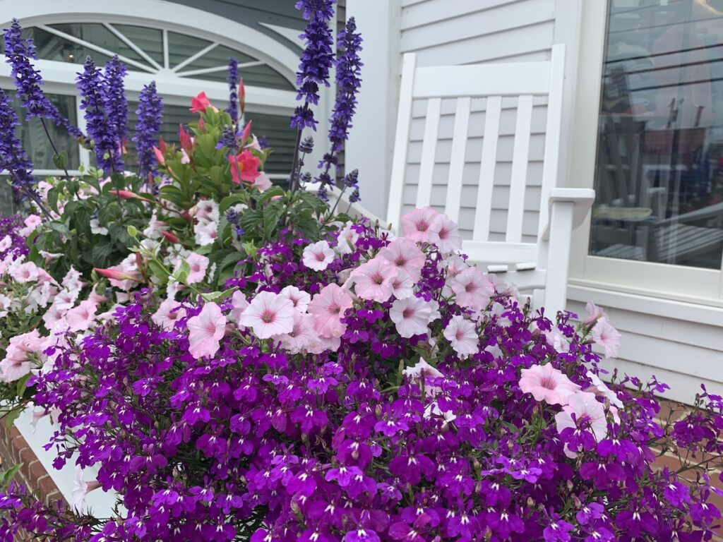 Flowers in Chatham, MA.