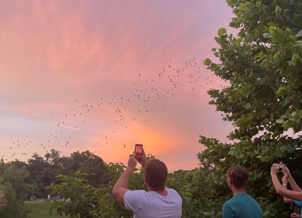 Bat Walk at Waugh Bridge in Buffalo Bayou Park.