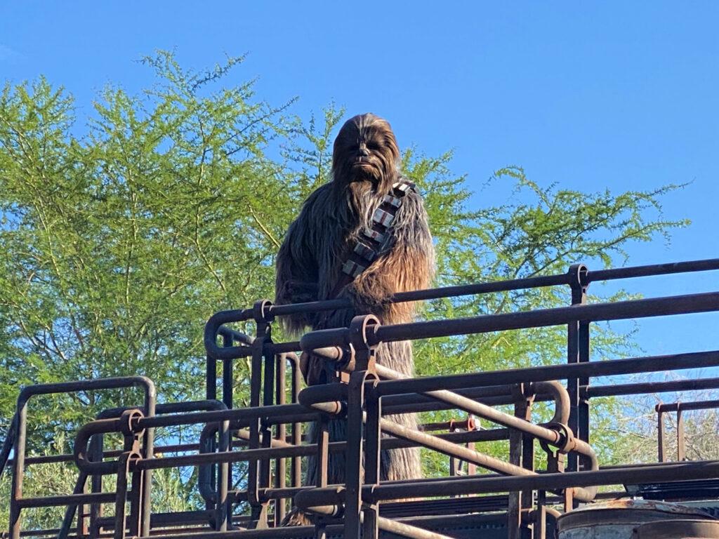 Chewbacca in Hollywood Studios