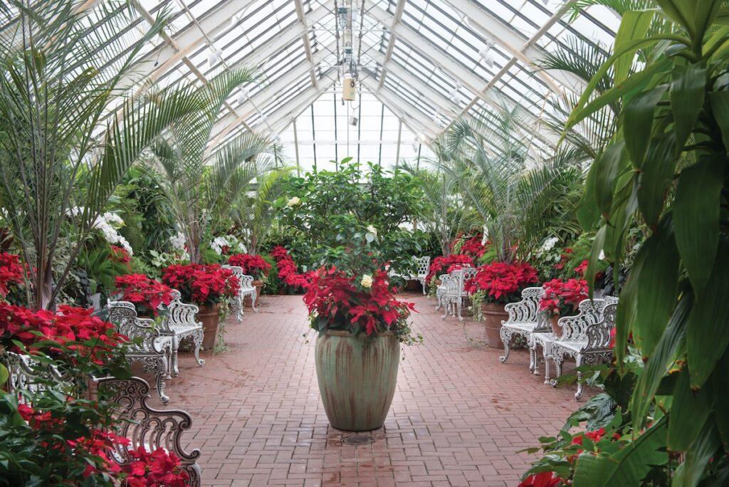 Poinsettias at the estate